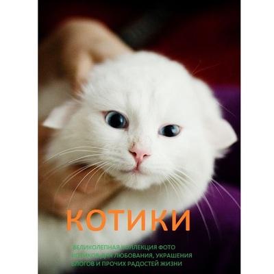 Антон Рогов Котики